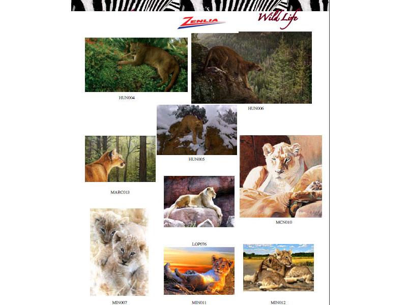At Wildlife 24 15